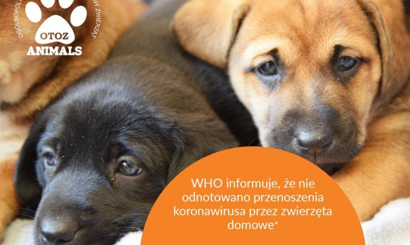 WHO Informuje !!!