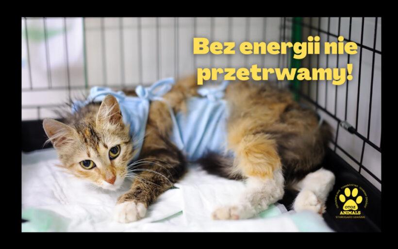 Bez energii nie przetrwamy !