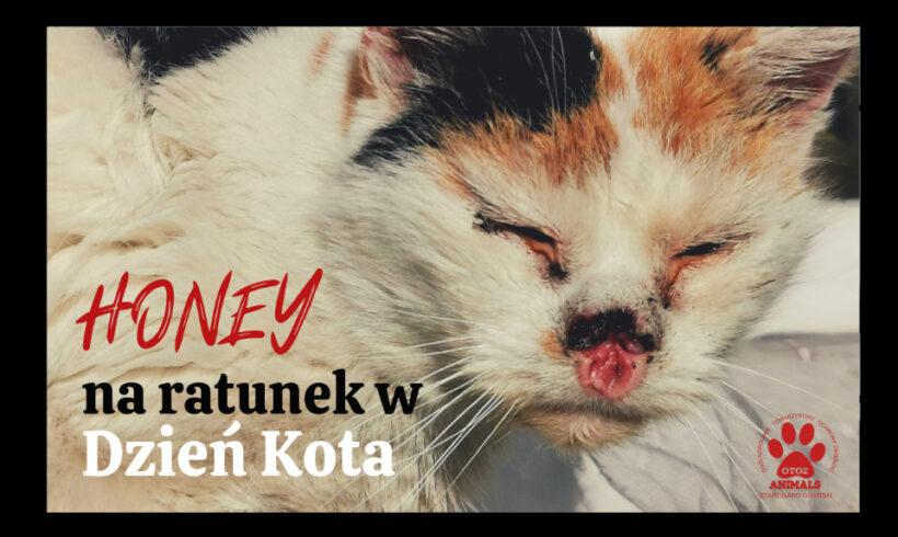 Honey – na ratunek w Dzień Kota